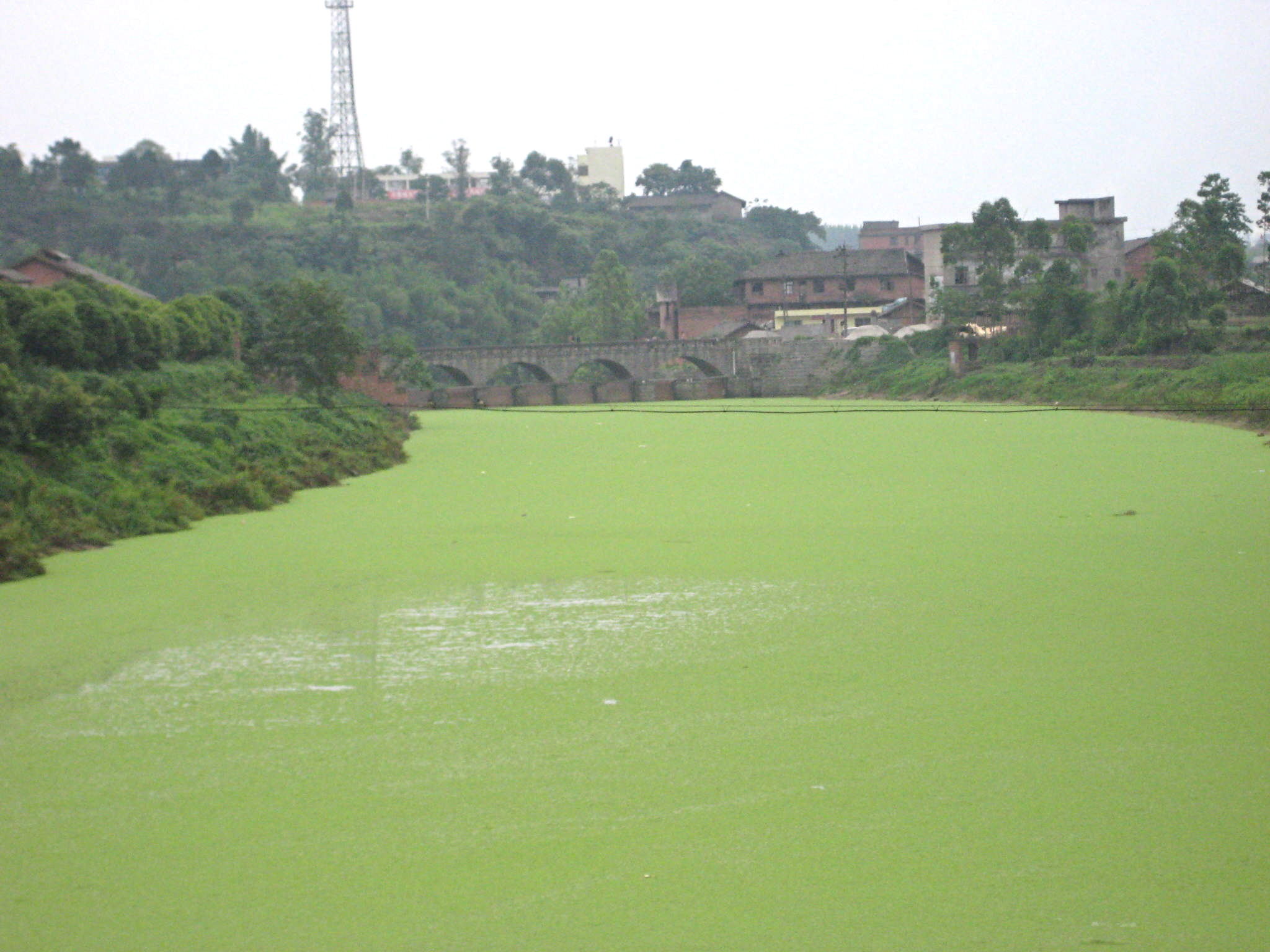 agricultural pollution Essays - largest database of quality sample essays and research papers on agricultural pollution.